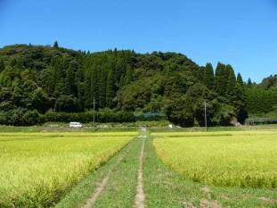 高藤山全景